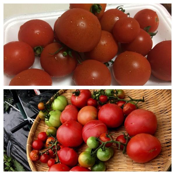 トマト 追 熟
