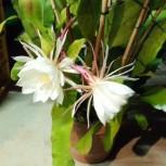 鉢花 庭の花