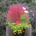 花・樹木など