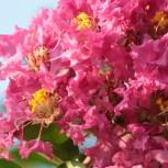 植木の花や果実
