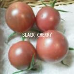 2016・エアルームトマト(種から)とブルートマト(苗から)