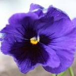わが家の花達