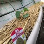 プランター・鉢植え