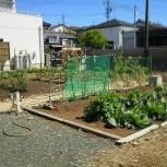 uzuraの菜園