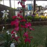 H29.花々