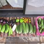 2018夏野菜