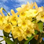 31-01お花