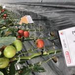 タキイ農場 栽培講習会
