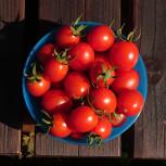 ミニトマトグリーンカーテン仕立て