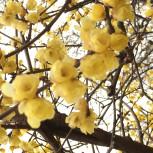 2020花、樹木