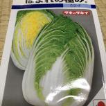 2020白菜