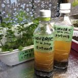 発酵油粕液肥有機100%
