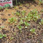 2021・春夏/葉モノ&根菜