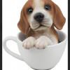 beagleさん