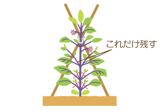 方 茄子 の 育て