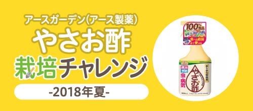 やさお酢栽培チャレンジ